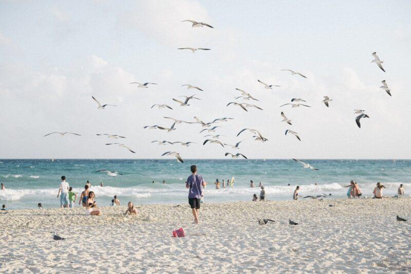 Birds on the beach at Playa del Carmen.