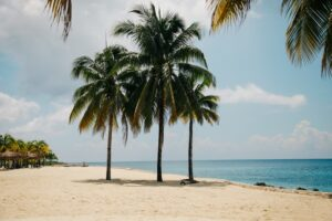 Palm trees at noon, Cozumel, Mexico.