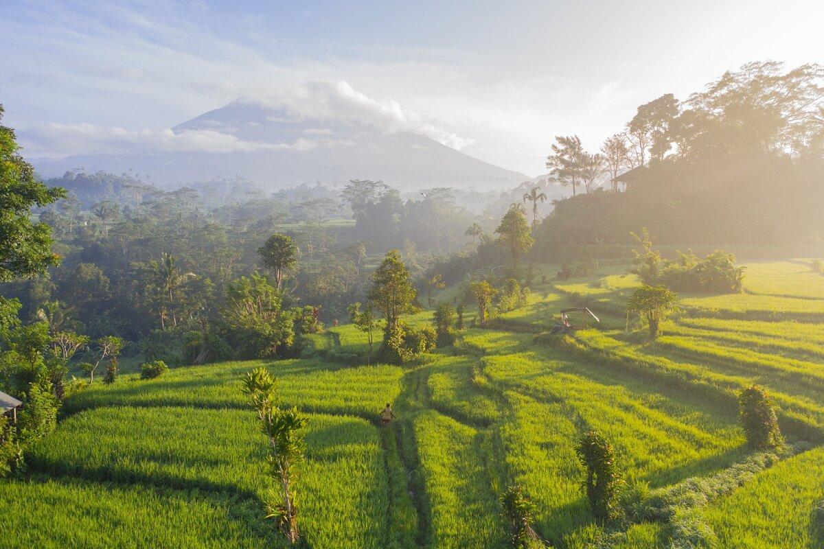 Rice Fields in Bali