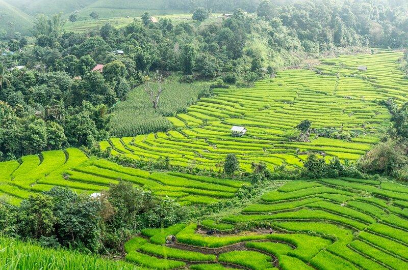rice-terraces-near-chiang-mai