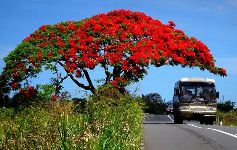 mauritius-transportation- digital-nomads